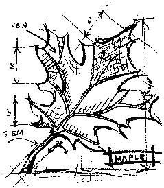 Tim Holtz Rubber Stamp MAPLE SKETCH Stampers Anonymous P1-1940