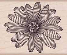 Hero Arts Rubber Stamp ETCHED DAISY f5741