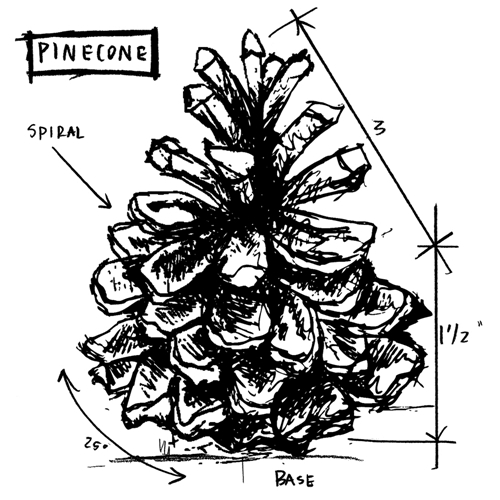 Tim Holtz Rubber Stamp PINECONE SKETCH Stampers Anonymous P1-2417 Preview Image