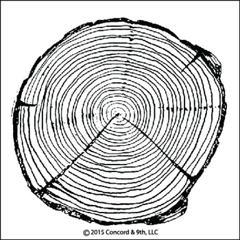 Concord & 9th TREE RING Clear Stamp Set 10027C9
