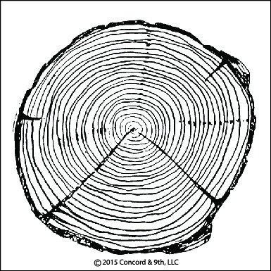 Concord & 9th TREE RING Clear Stamp Set 10027C9 zoom image