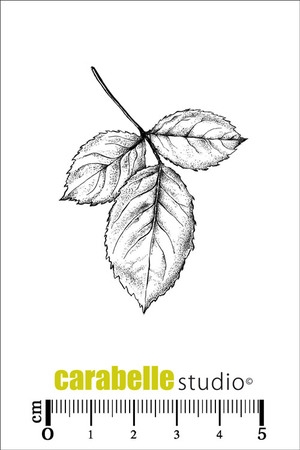 Carabelle Studio FEUILLES Cling Stamp SMI0179  Preview Image