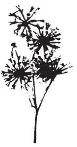 Tim Holtz Rubber Stamp DANDELION Flower Stampers Anonymous K3-1210