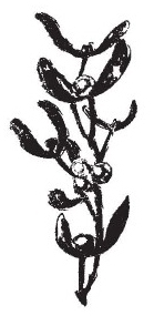 Tim Holtz Rubber Stamp MISTLETOE SPRIG Christmas Stampers Anonymous J5-1187 zoom image