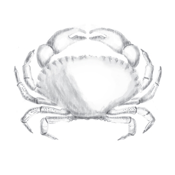 DSC-058 Spellbinders CRAB 3D Cling Shading Stamps
