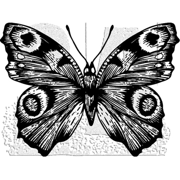 Tim Holtz Rubber Stamp BUTTERFLY 9 Stampers Anonymous J1-2984