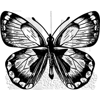 Tim Holtz Rubber Stamp BUTTERFLY 8 Stampers Anonymous J1-2983