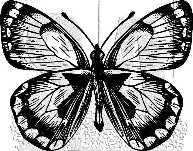 Tim Holtz Rubber Stamp BUTTERFLY 8 Stampers Anonymous J1-2983 zoom image