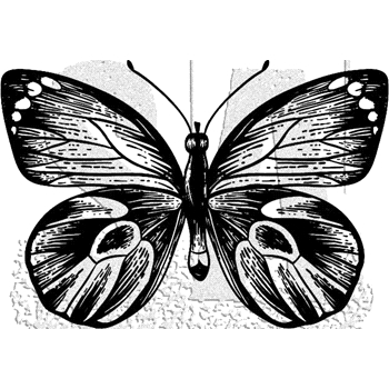 Tim Holtz Rubber Stamp BUTTERFLY 7 Stampers Anonymous J1-2982