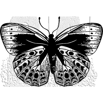 Tim Holtz Rubber Stamp BUTTERFLY 5 Stampers Anonymous J1-2981