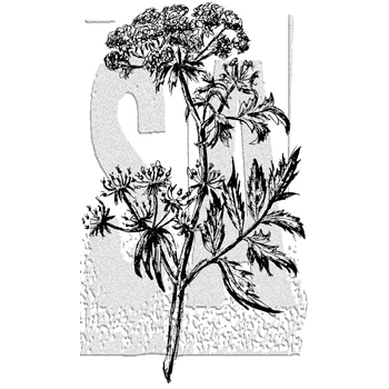 Tim Holtz Rubber Stamp ILLUSTRATED FLOWER 2 Stampers Anonymous P5-2990
