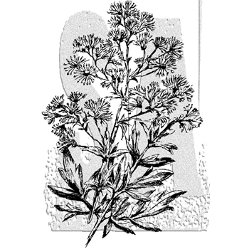 Tim Holtz Rubber Stamp ILLUSTRATED FLOWER 1 Stampers Anonymous P4-2988