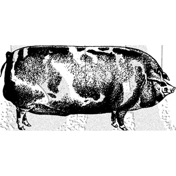 Tim Holtz Rubber Stamp PIG Stampers Anonymous E1-3025