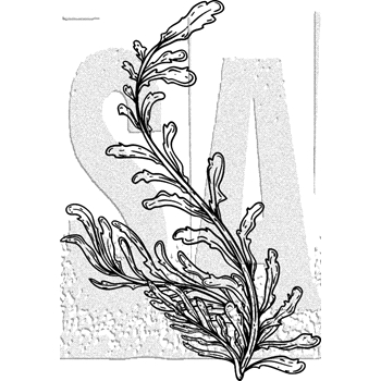 Tim Holtz Rubber Stamp SEAWEED Stampers Anonymous J3-3031