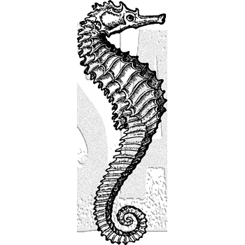 Tim Holtz Rubber Stamp SEAHORSE Stampers Anonymous J5-3033
