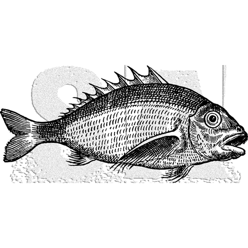 Tim Holtz Rubber Stamp FISH 1 Stampers Anonymous K5-3037 Preview Image