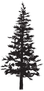Tim Holtz Rubber Stamp PINE TREE Christmas Stampers Anonymous P2-1258