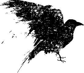 Tim Holtz Rubber Stamp SCRATCHED RAVEN Bird Halloween Stampers Anonymous P1-1454 Preview Image