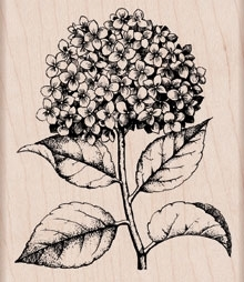 Hero Arts Rubber Stamp HYDRANGEA zoom image