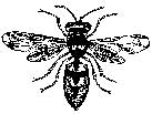 Tim Holtz Rubber Stamp BEE Stampers Anonymous E1-1534