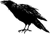 Tim Holtz Rubber Stamp SKETCH RAVEN J1-1564 Stampers Anonymous Preview Image