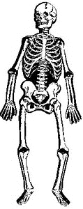 Tim Holtz Rubber Stamp VINTAGE SKELETON U5-1616 Stampers Anonymous Preview Image