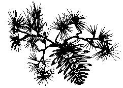 Tim Holtz Rubber Stamp PINECONE BRANCH M3-1572 Stampers Anonymous Preview Image