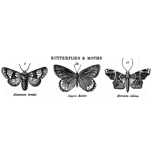 Tim Holtz Rubber Stamp BUTTERFLIES AND MOTHS j3-1672 Stampers Anonymous Preview Image
