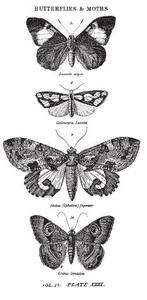 Tim Holtz Rubber Stamp  BUTTERFLIES AND MOTHS 1 p2-1673 Stampers Anonymous Preview Image