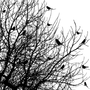 Impression Obsession Cling Stamp BIRDS ON TREES CC102 zoom image